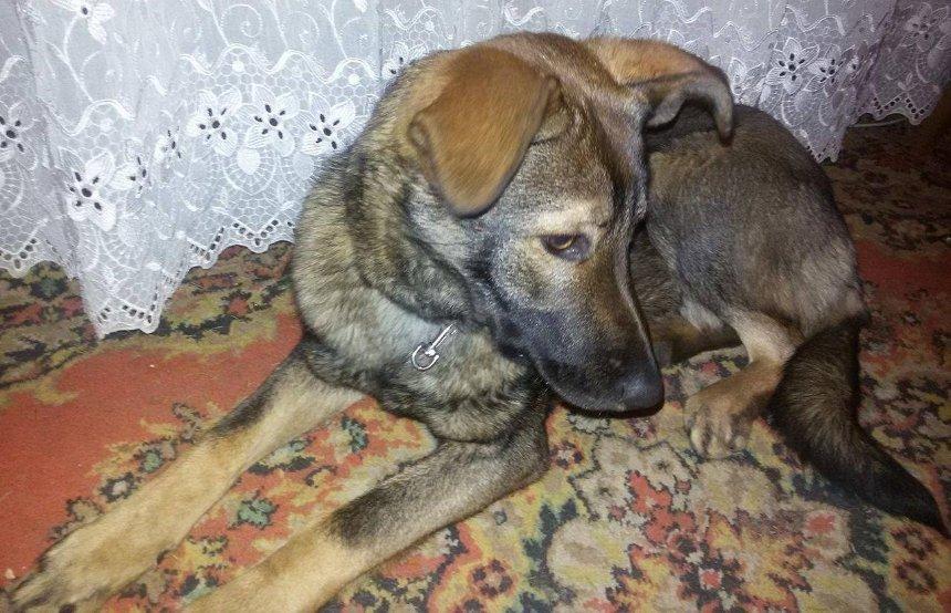 Київський Хатіко: собака залишився чекати на господаря, якого забрала швидка