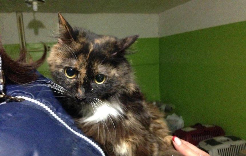 В хорошие руки: волонтеры ищут новый дом для котов после смерти их хозяйки