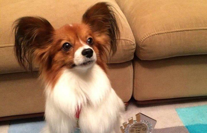 Пропал чемпион: в Киевской области ищут породистую собаку