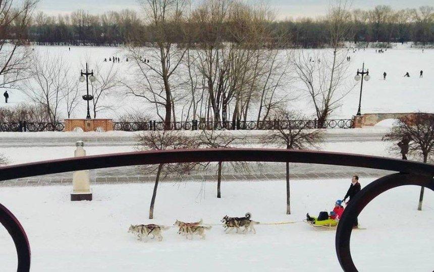 Собачья радость: киевляне пересели на необычный вид транспорта