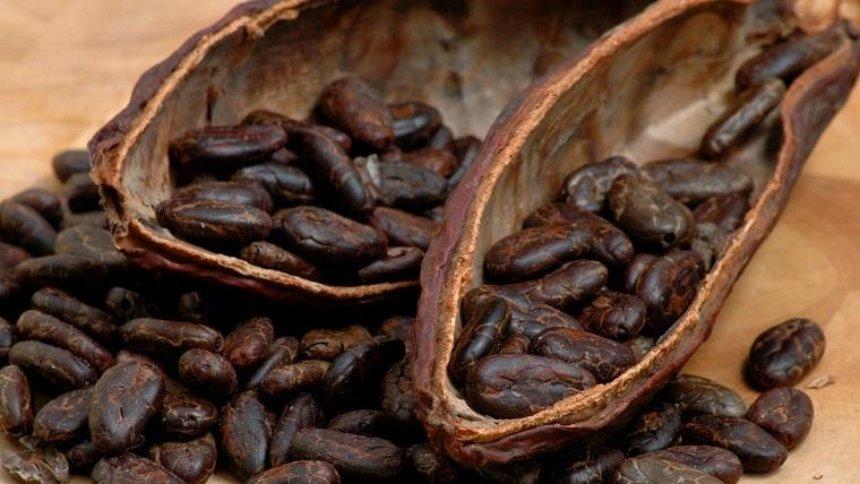Шоколад может полностью исчезнуть через 40 лет