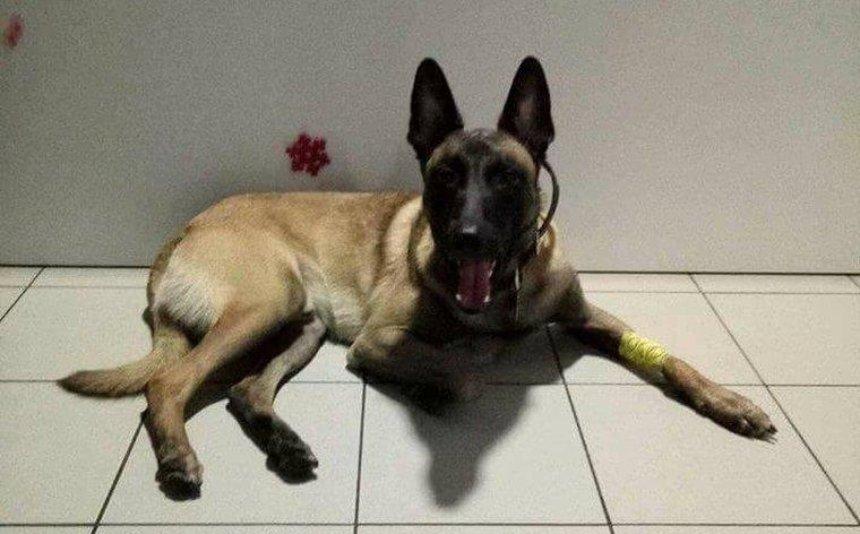 В Киеве пес-донор спасает других собак (фото)