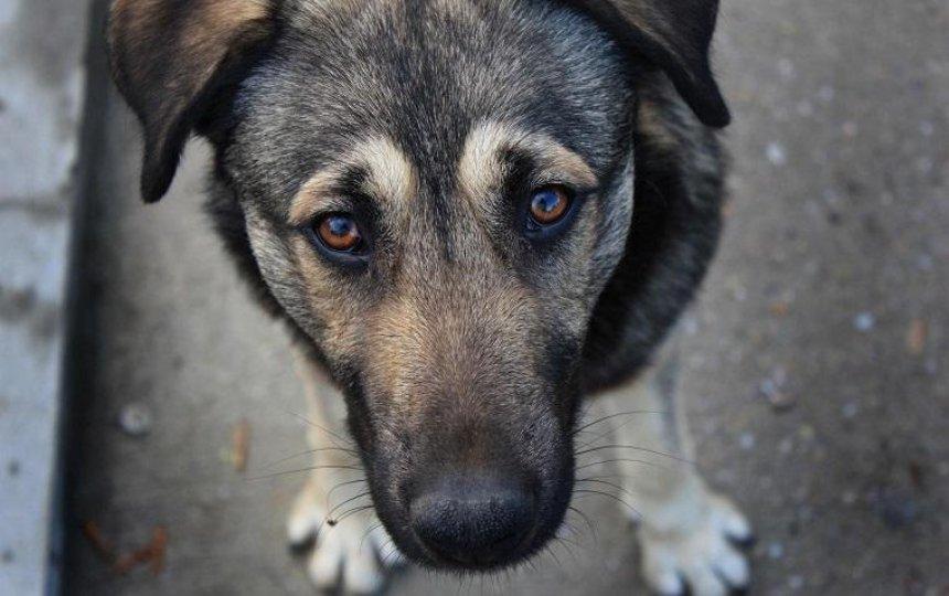 В столице будут судить мужчину, который избил бездомную собаку