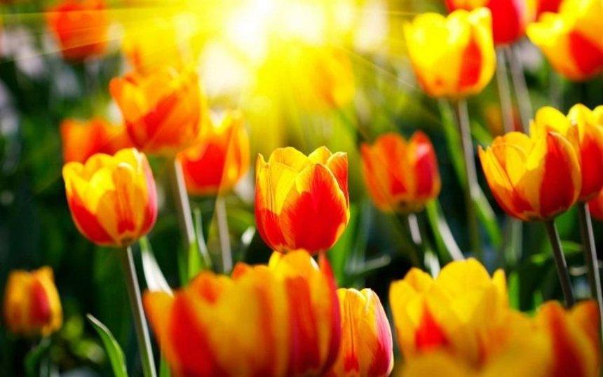 «Киевзеленстрой» подарит цветы: коммунальщики объявили весенний конкурс