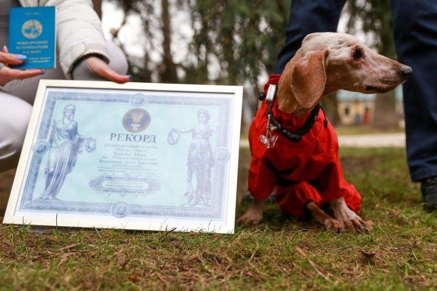 В Киеве умерла самая старая собака Украины: она прожила почти 20 лет