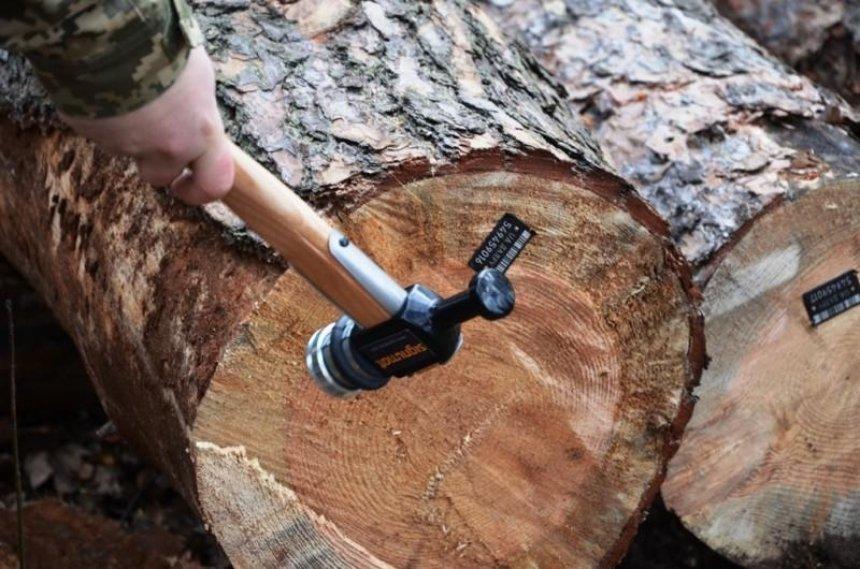 Каждое срубленное в Киеве дерево получит номер и штрих-код: зачем это делают