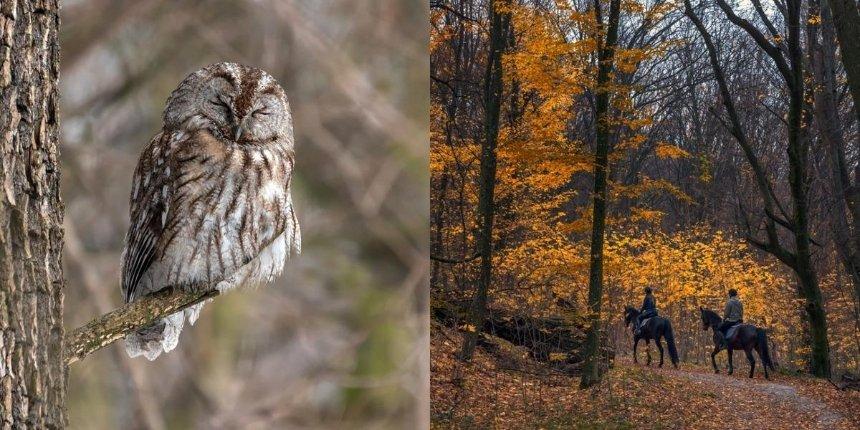 Жюри фотоконкурса «Вики любит Землю 2020» объявило победителей спецноминаций вКиеве