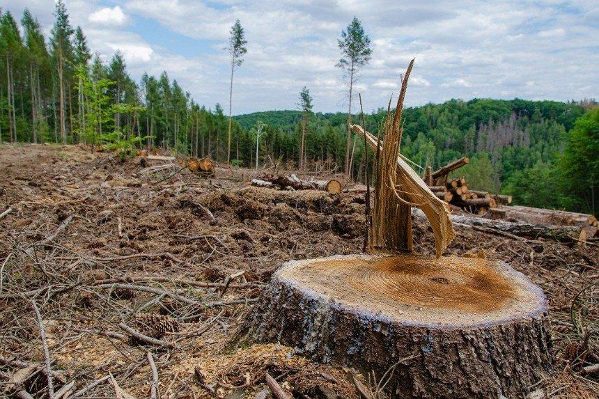В Украине запустили эко-бота для жалоб на вырубку деревьев и загрязнение природы
