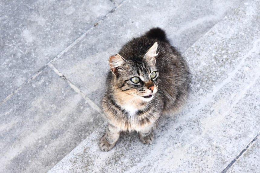 На Борщаговке дикий кот разгромил магазин посуды