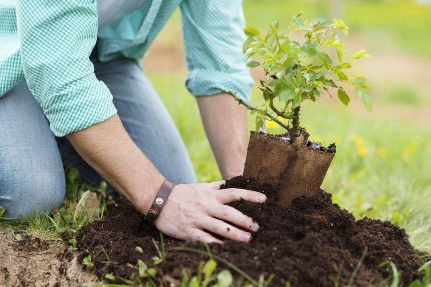 В Киеве за год хотят высадить более 100 тысяч растений