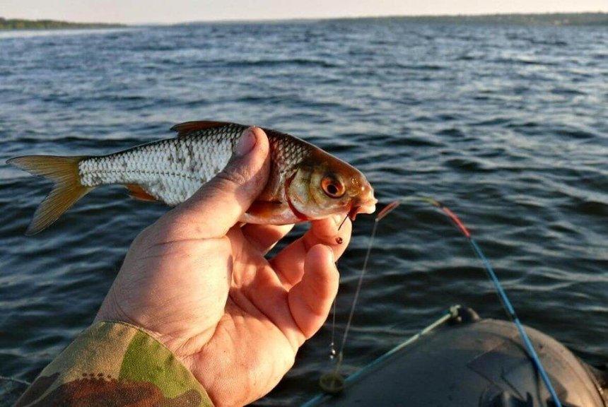В Киеве вводят запрет на рыбную ловлю