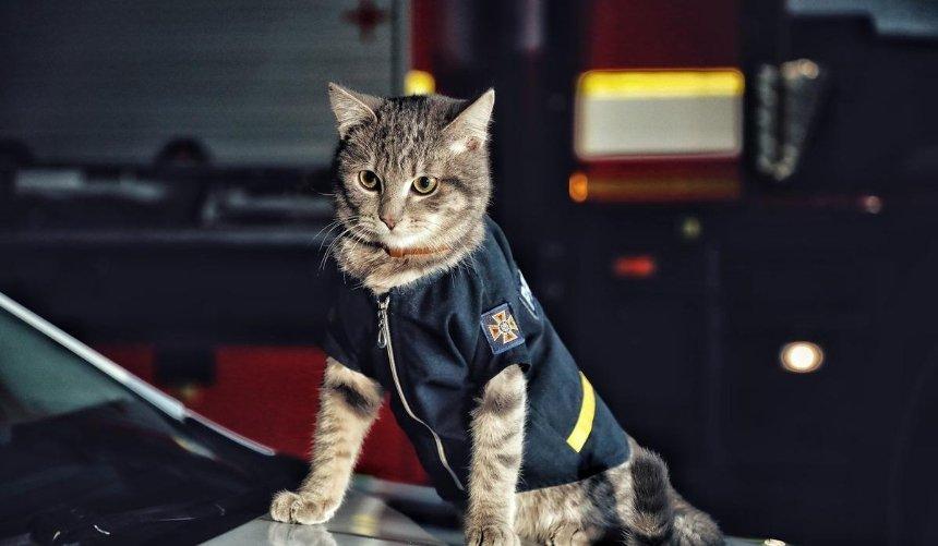 В ГСЧС Киева котик-спасатель получил звание майора