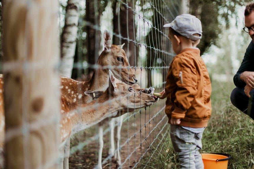 Киевский зоопарк временно снизил цены на билеты и изменил режим работы