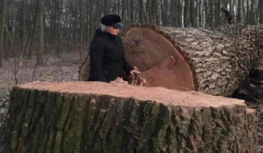 ВГолосеевском лесу спилили столетние дубы: вботсаду НУБиП заявили, что вырубка была плановой