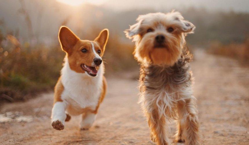 ВКиеве создадут центр для защиты животных отжестокого обращения