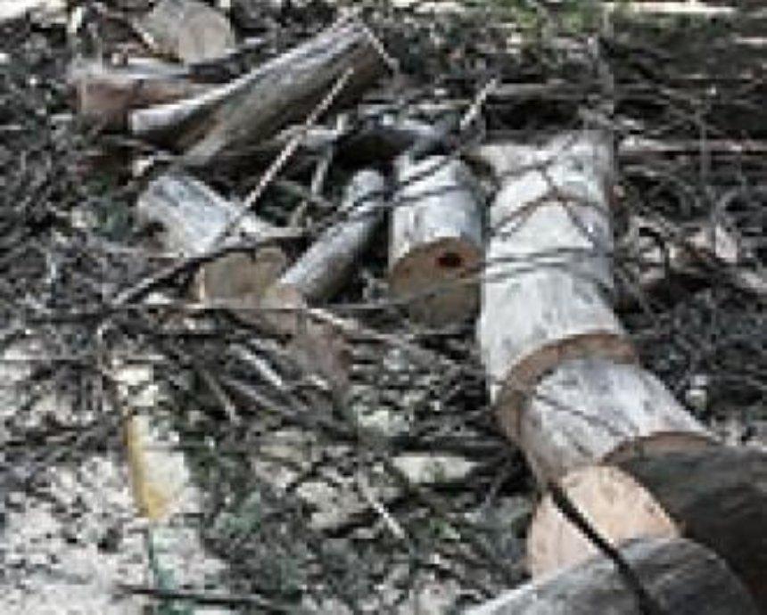 В Беличанском лесу снова рубят деревья
