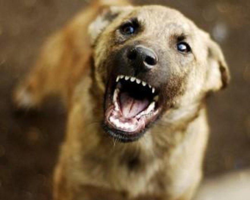 Собака бывает кусачей: что делать, если пострадал от укуса
