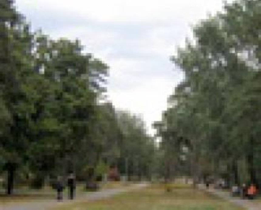 На бульваре Леси Украинки высадили новые тополя