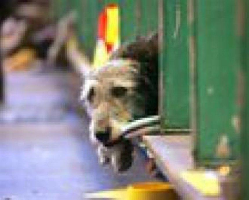 В Дарницком районе построят приют для животных