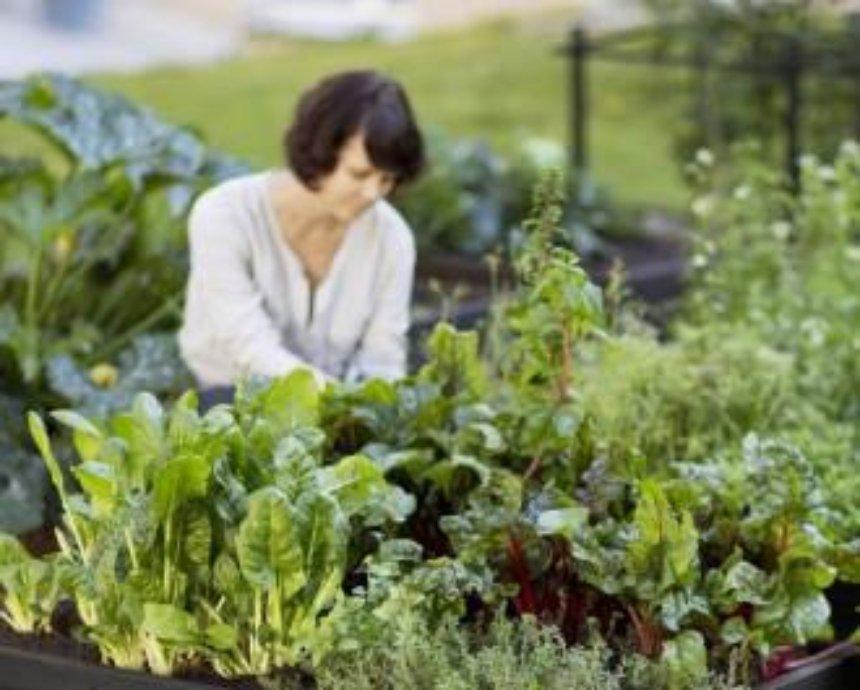На ВДНХ откроется хаб для садоводов