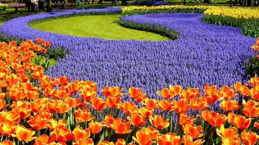 На Певческом поле состоится ежегодная выставка тюльпанов