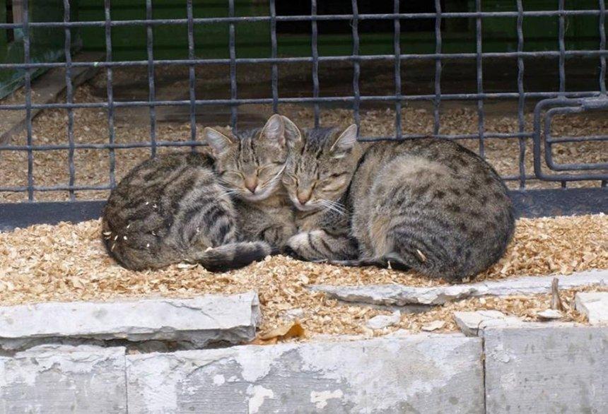 В Киевском зоопарке котикам нужно помочь с переездом