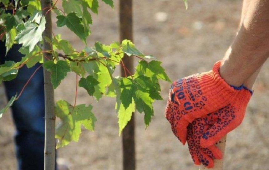 В Киеве посадят деревья в память о бойцах АТО