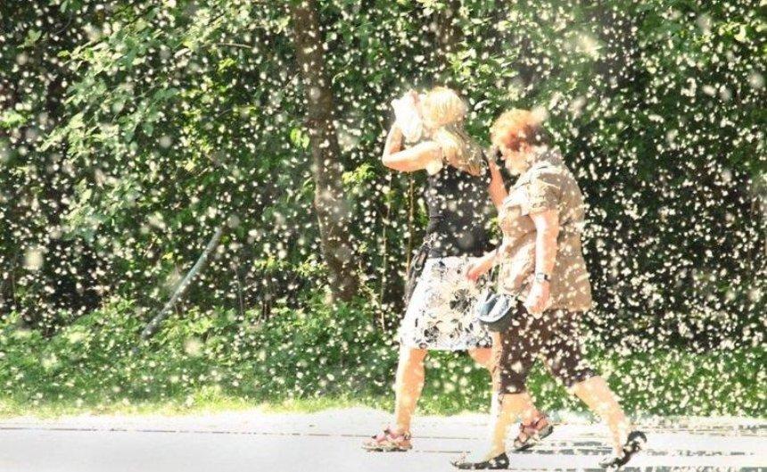 Накиевских улицах высадят «антиаллергенные» тополя