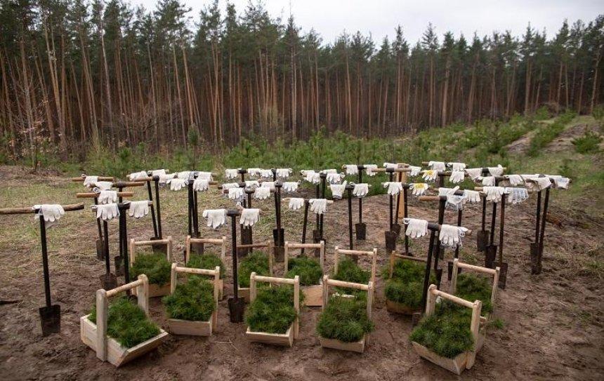 Представители городской власти иобщественности высадили 10000 сеянцев сосны влесу вКонча-Заспе,— КГГА