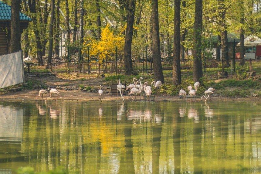 Реконструкция зоопарка: озера с водопадами и открытые вольеры заработают в июле