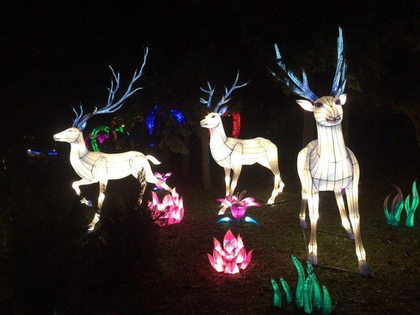 Фестиваль китайских фонарей на Певческом поле продлили на неделю
