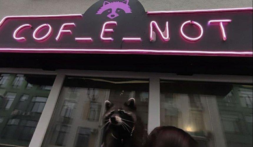 В столице открылось кафе с живым енотом