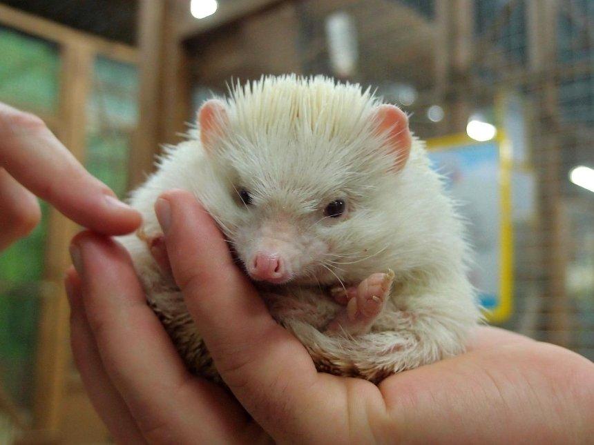 В одной из худших британских тюрем открыли контактный зоопарк