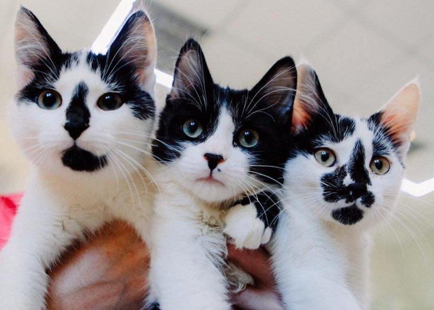 Не будьте байдужими: кошенята шукають домівку (фото)