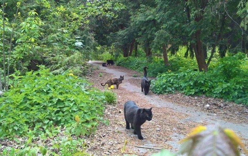 Волонтеры обустраивают на территории зоопарка городок для бездомных котов