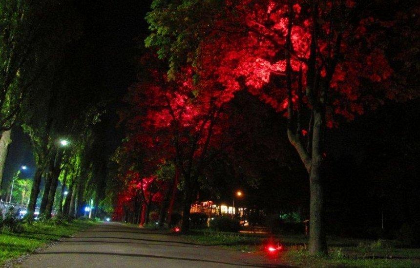 На Русановке заработала разноцветная подсветка деревьев (фото, видео)
