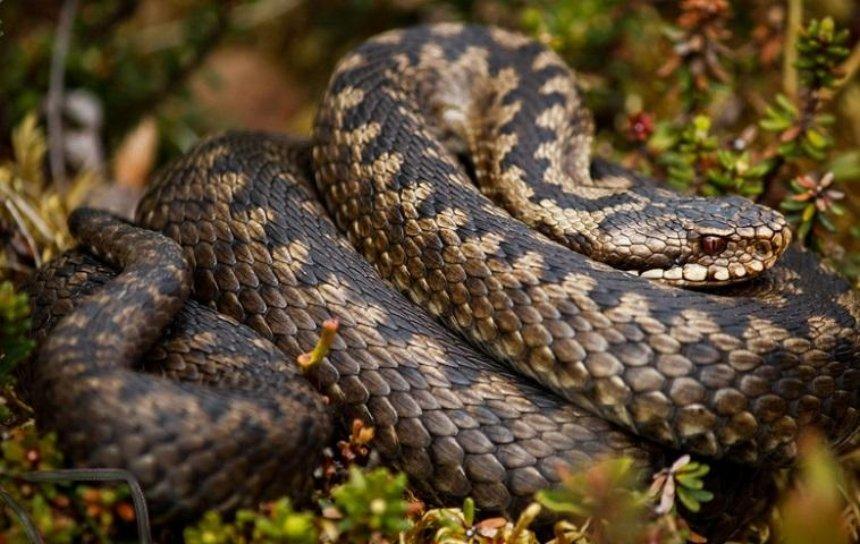 На Киевщине активизировались змеи
