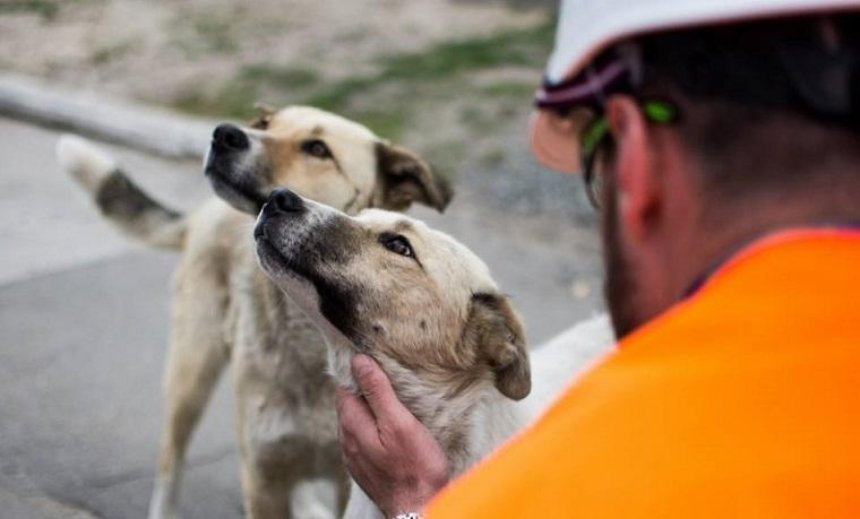 Бездомные щенки с ЧАЭС найдут дом в США (фото)