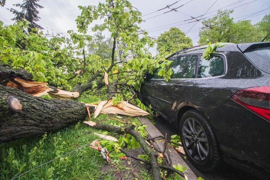Возле Лавры дерево упало на машину, пострадал водитель (фото)