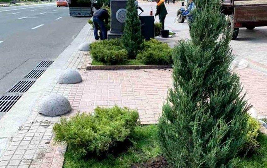 На Крещатике высадили 250 растений, но они временные