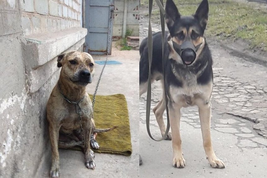 Минюст начал продавать собак за долги их владельцев