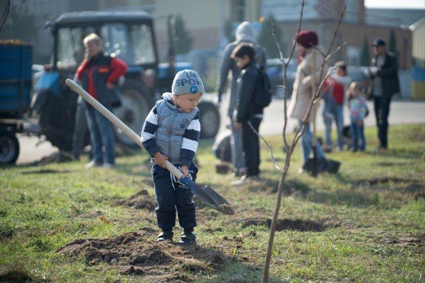 Высадку ста тысяч деревьев в Киеве перенесли на осень
