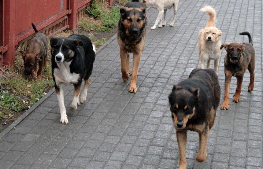В Дарницком районе обнаружили трупы собак