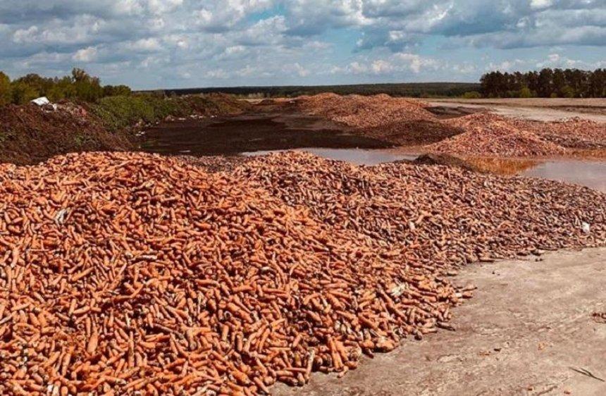 Под Киевом выкинули горы моркови
