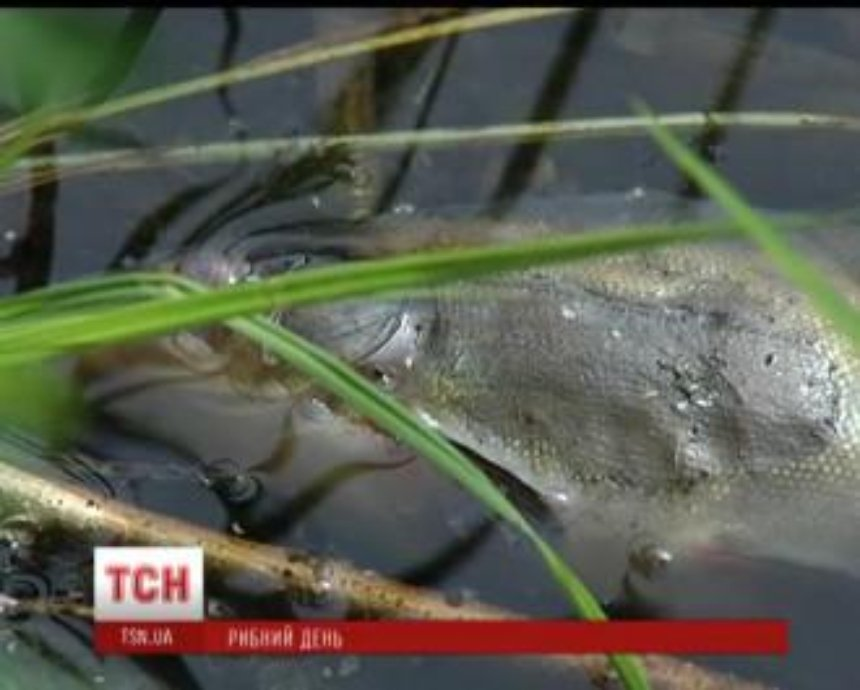 В Киеве река покрылась мертвечиной