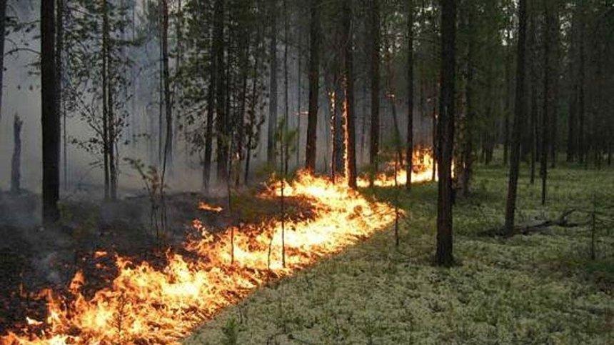 В Киеве объявили повышенный уровень пожароопасности