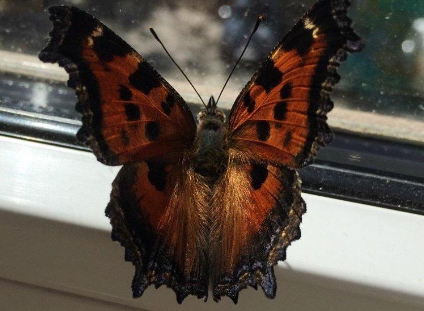 Киевлянам рассказали, откуда в городе так много бабочек