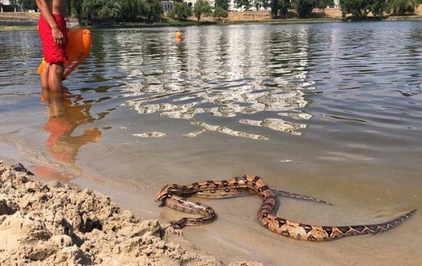 На озере Тельбин отдыхающие заметили гигантских змей