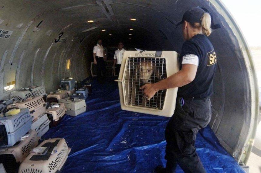В Канаде подтвердили гибель собак, которых перевозила МАУ