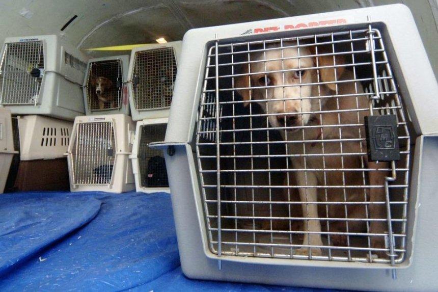 Гибель щенков на борту самолета МАУ: полиция Киевщины открыла уголовное производство